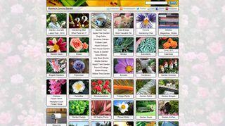 wlt_thumbnail-20089
